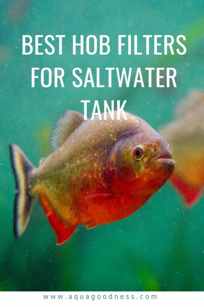 best hob filter for saltwater tank image