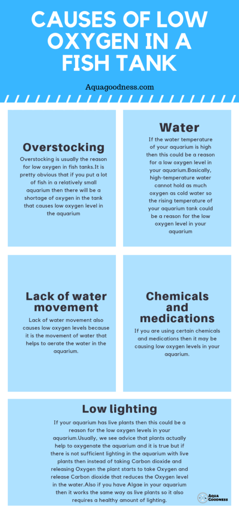 Causes of low oxygen in a fish tank infographic