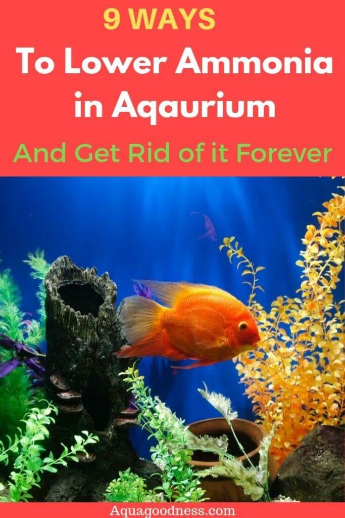 ways to lower ammonia in aquarium