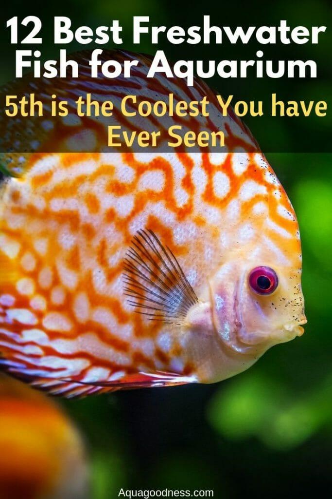 best frehwater fish for aquarium pinterest image