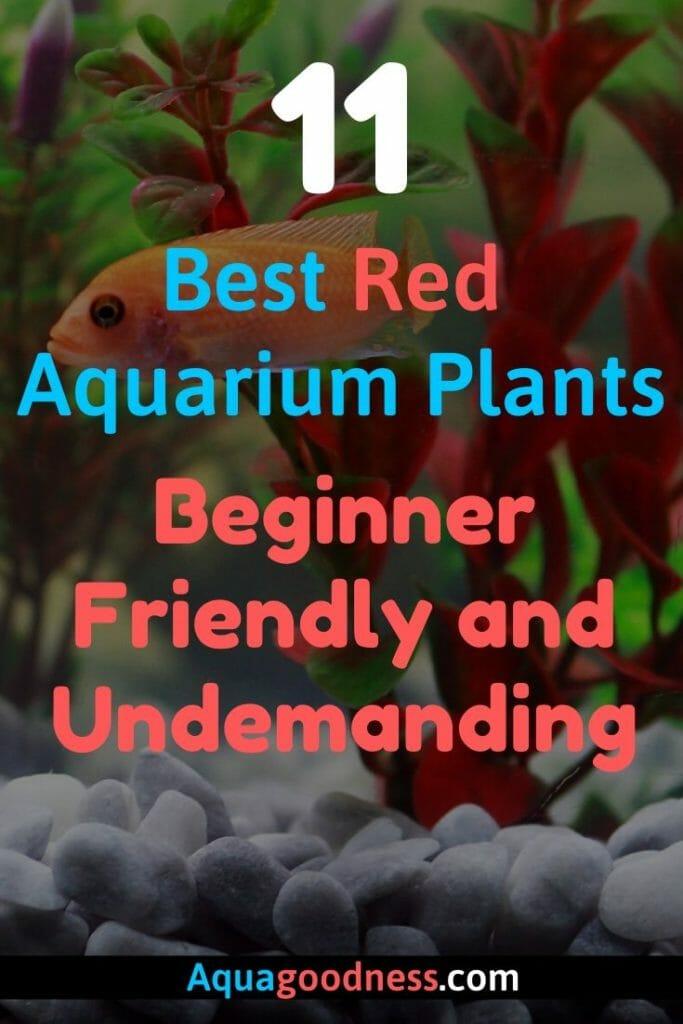 Best Red Aquarium Plants