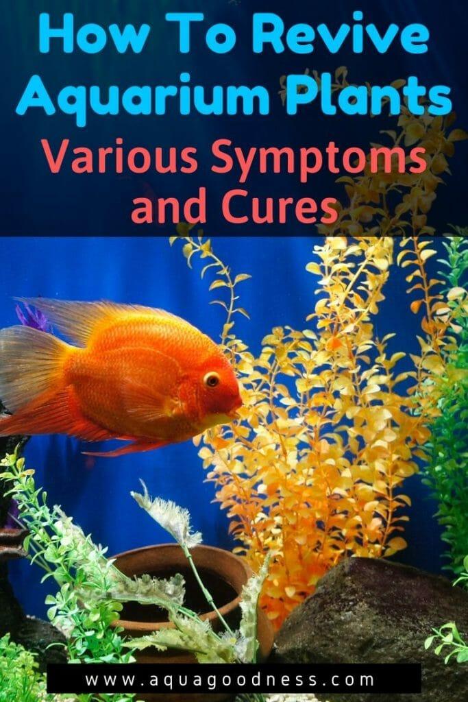 how to revive aquarium plants image