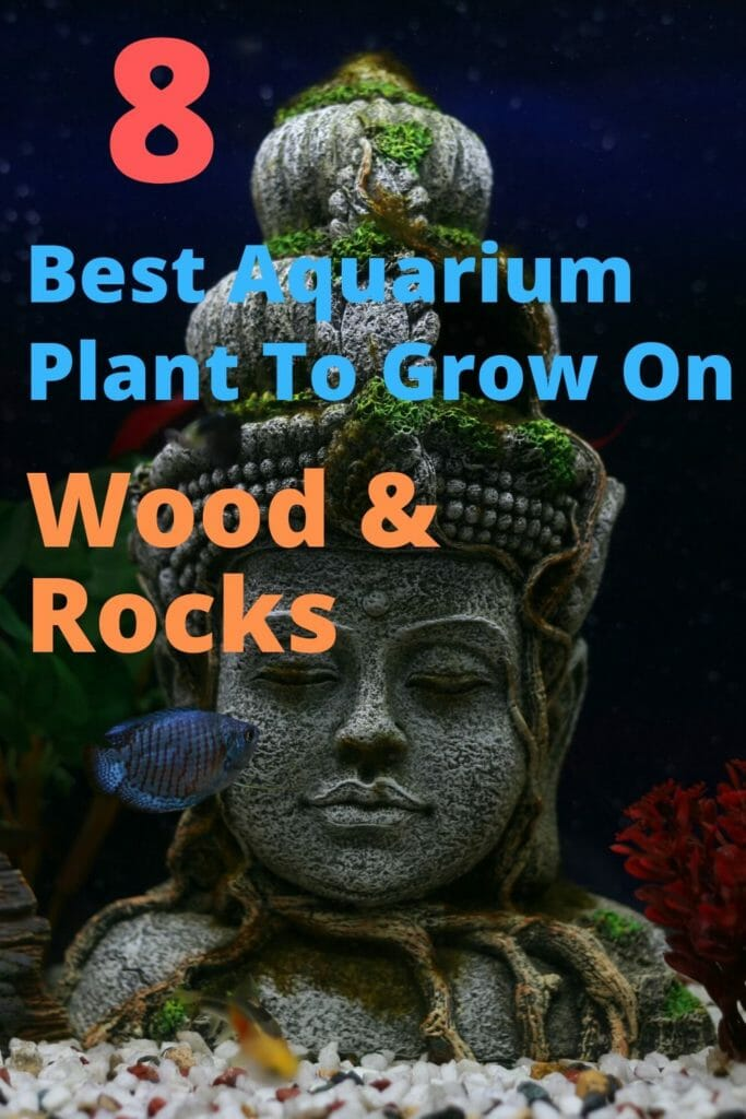 Best Aquarium Plant To Grow On Wood and Rocks image