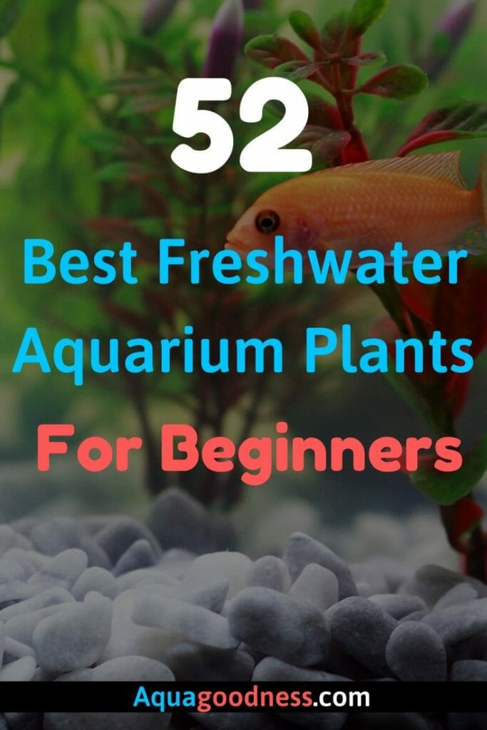 Best Freshwater Aquarium Plants For Beginners image