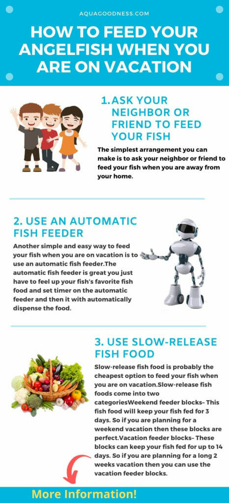 how to feed your fish when you are on vacation infographic