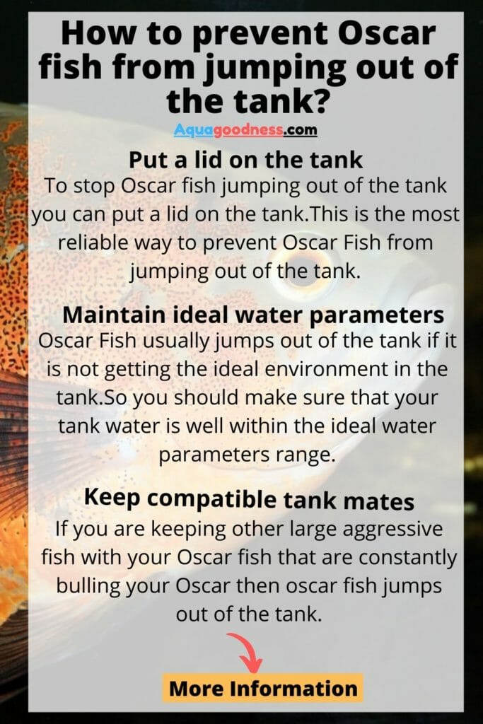 How to prevent Oscar fish from jumping out of the tank infographic
