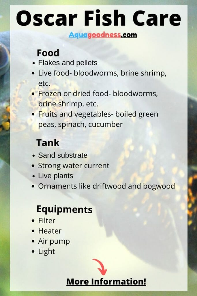 Oscar Fish Care infograaphic