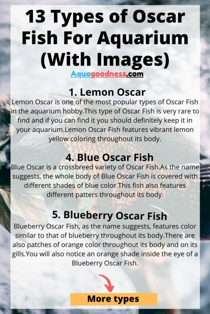 types of oscar fish infographic
