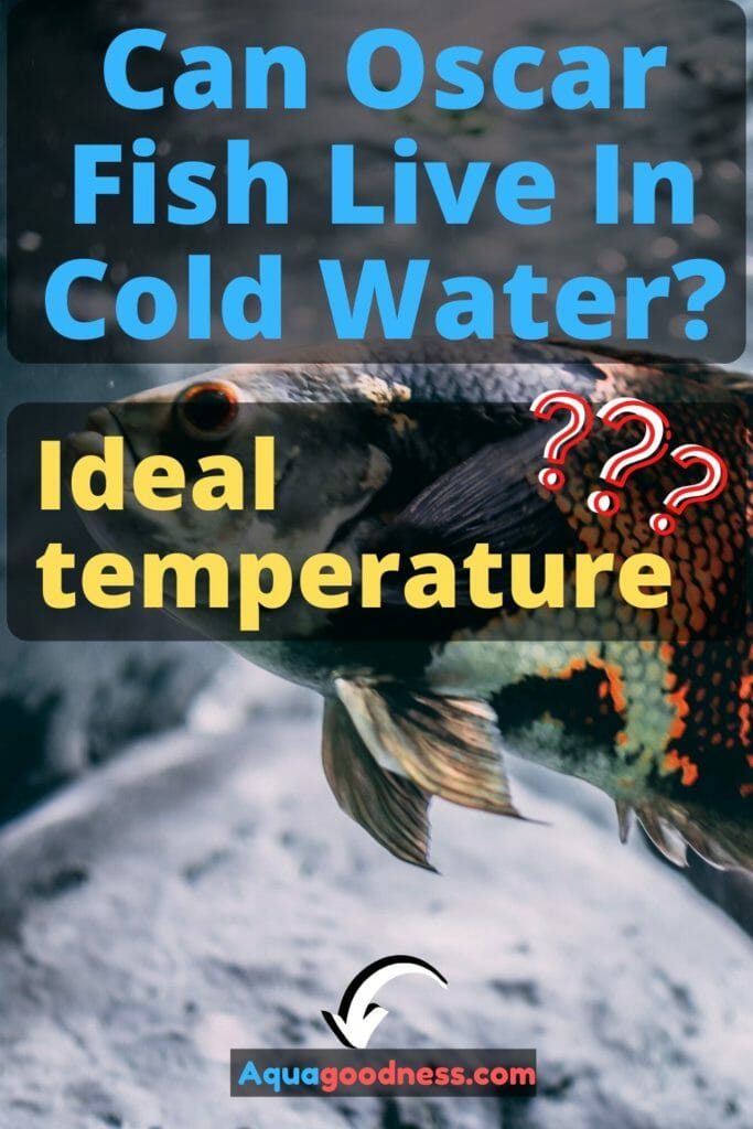 Can Oscar Fish Live In Cold Water Ideal Water Temperature