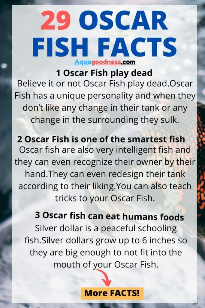 facts about oscar fish infographic