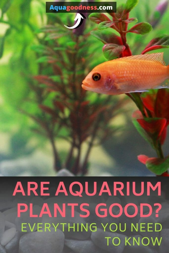 Are Aquarium Plants Good? (Everything you need to know) image