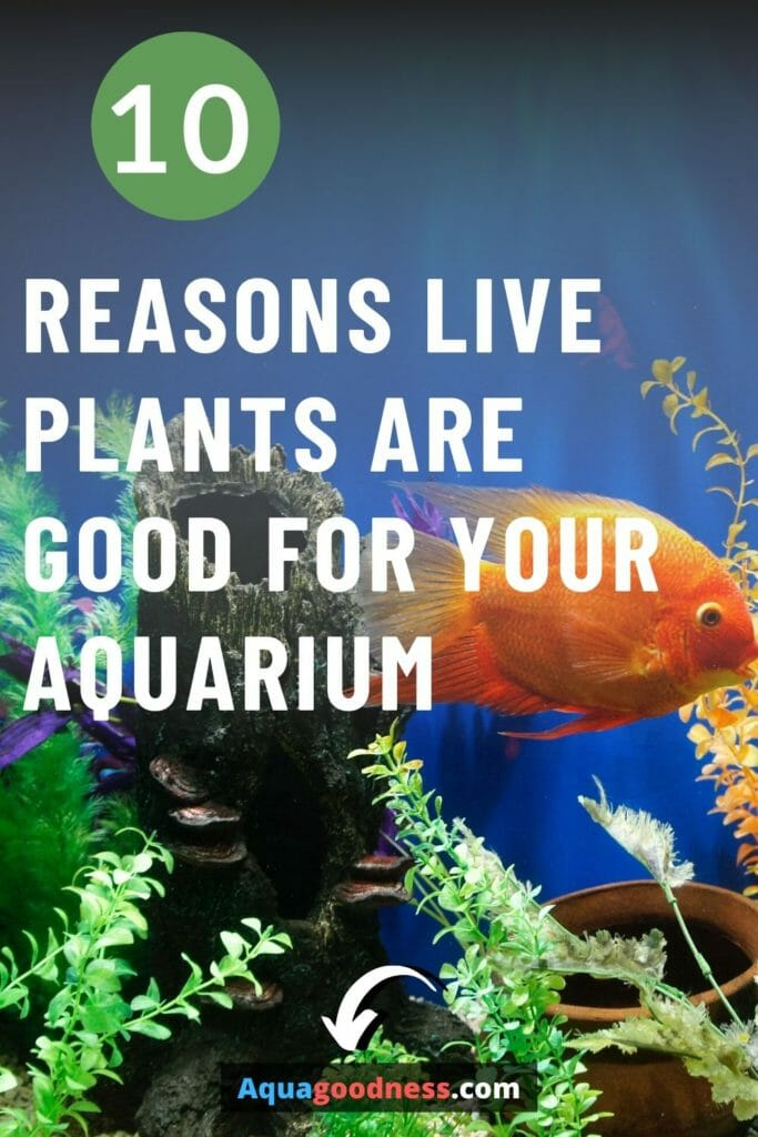 10 reasons live plants are good for your aquarium image