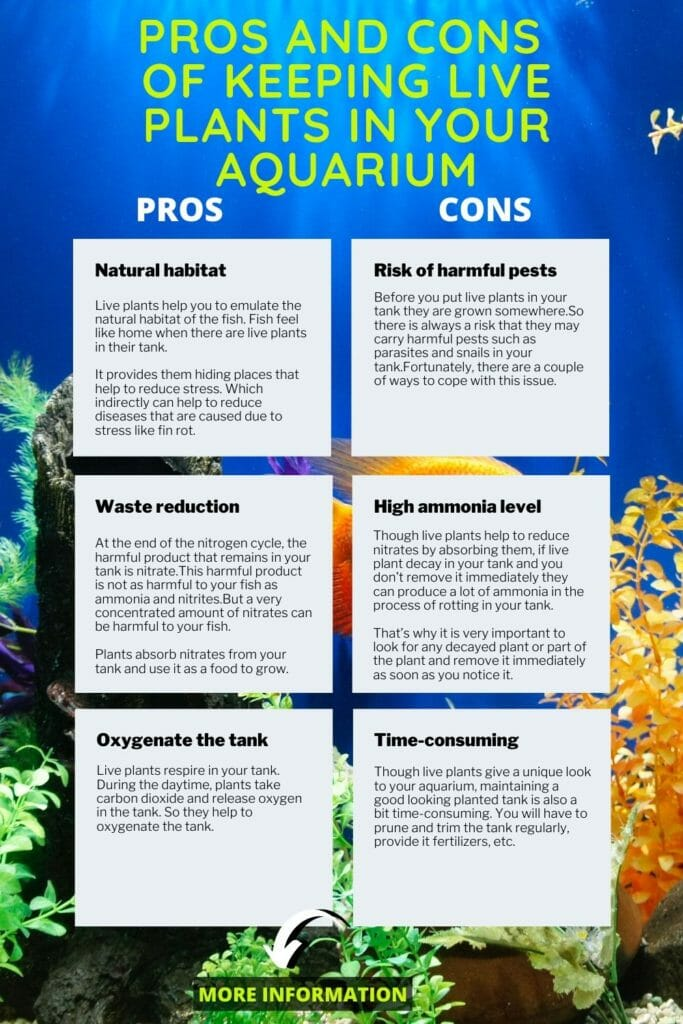 Pros and Cons of keeping live plants in your aquarium infographic