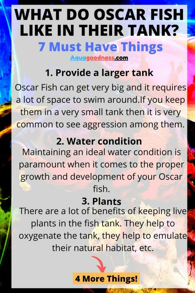 What Do Oscar Fish Like In Their Tank infographic