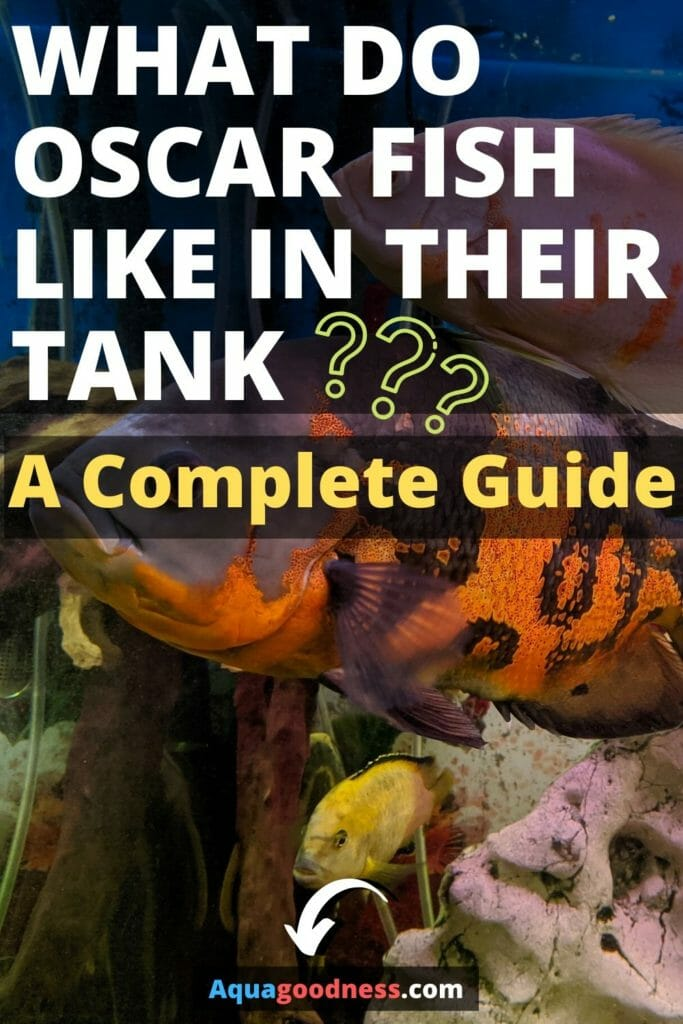 What Do Oscar Fish Like In Their Tank (A Complete Guide) image
