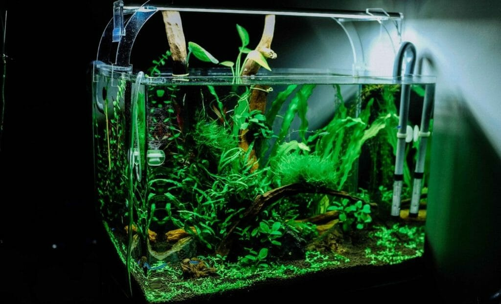 high tech planted tank with fish
