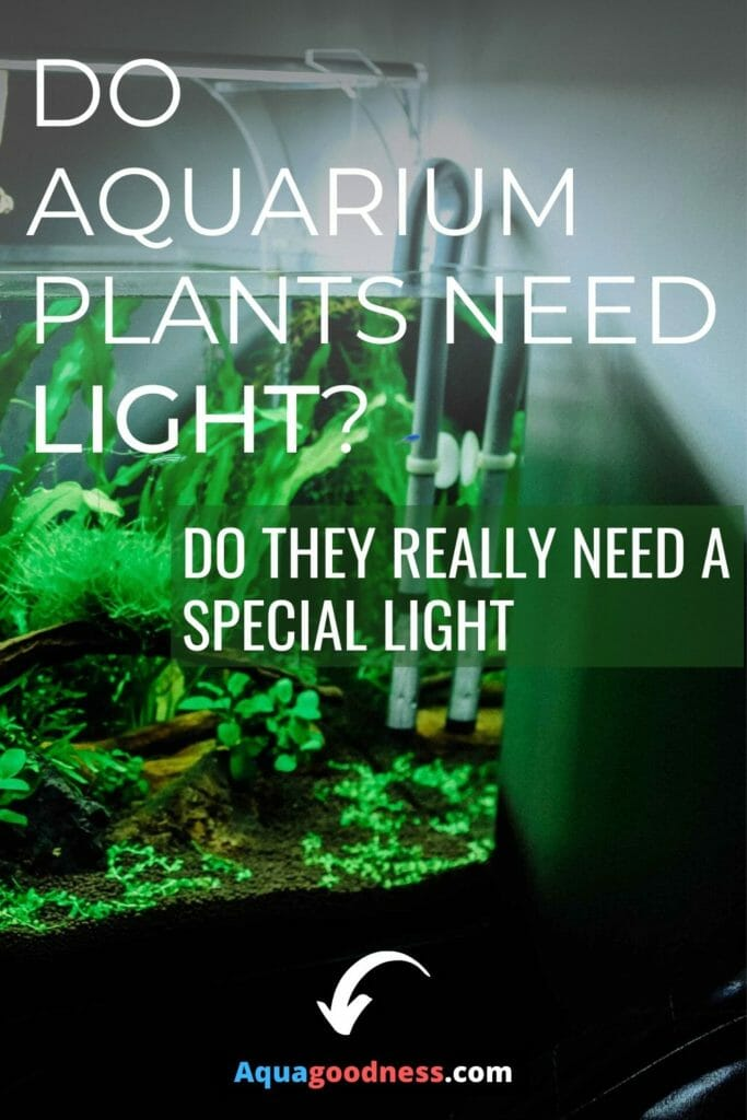 Do Aquarium Plants Need Light? (Do they really need a special light) image