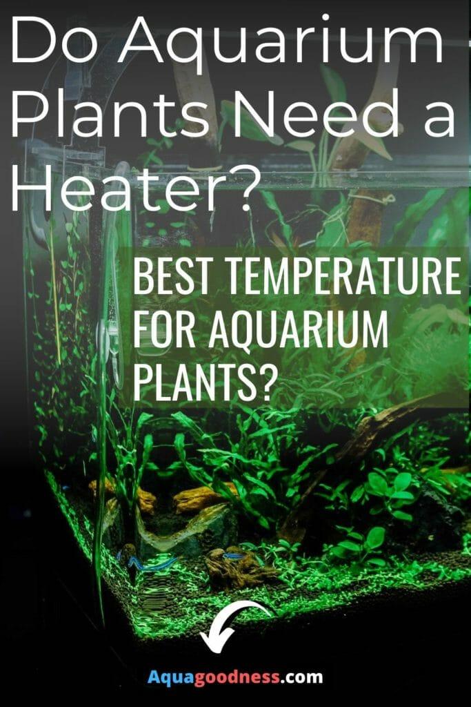 Do Aquarium Plants Need a Heater? image
