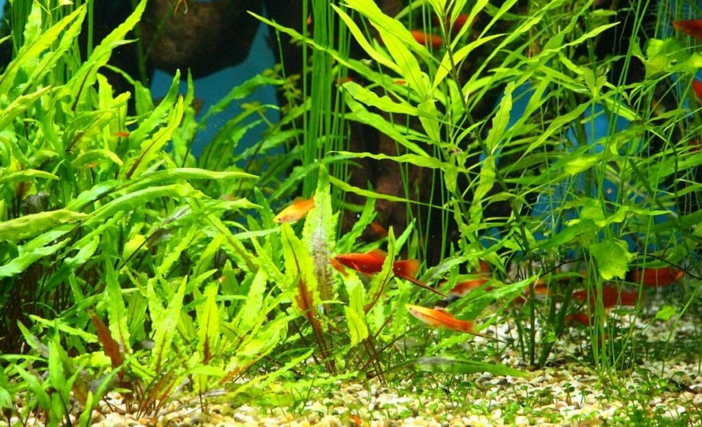 planted tank with fish