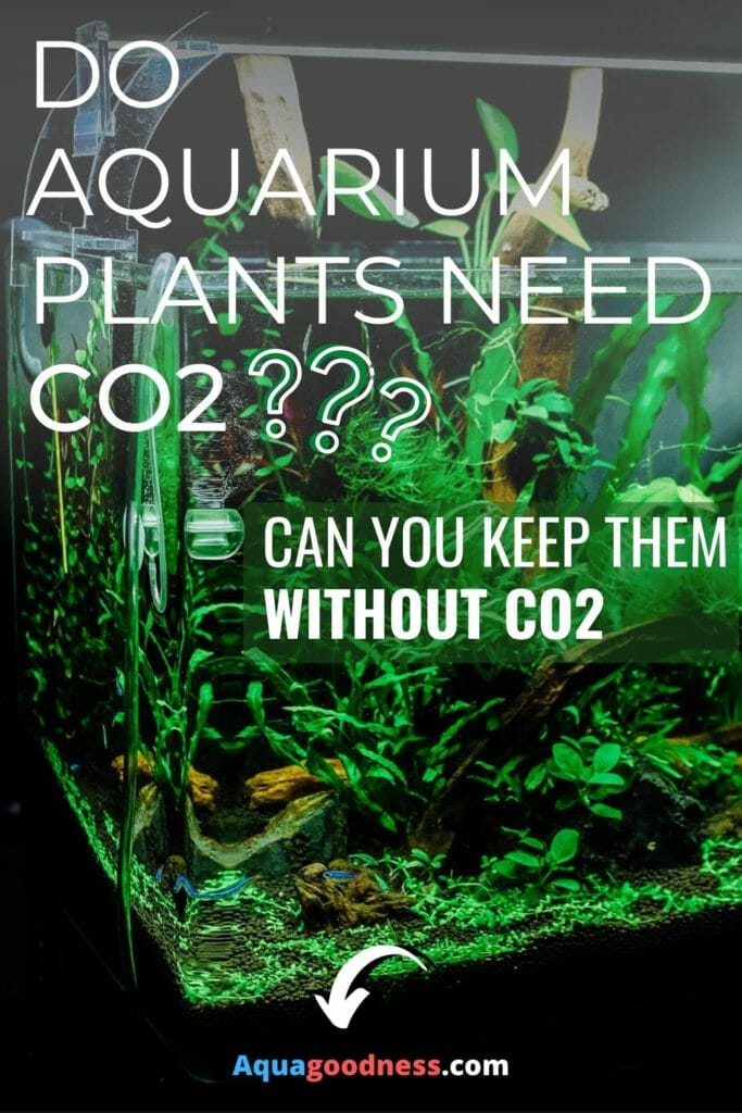 Do Aquarium Plants Need CO2? (Can you keep them without co2) image