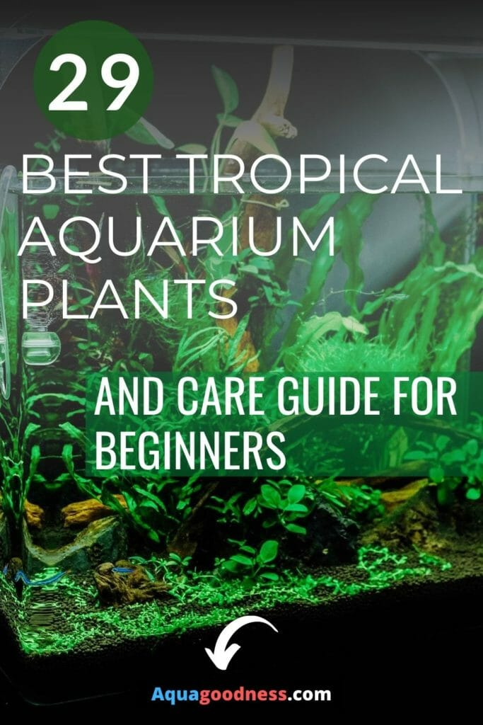 29 Best Tropical Aquarium Plants (And care guide for beginners) image