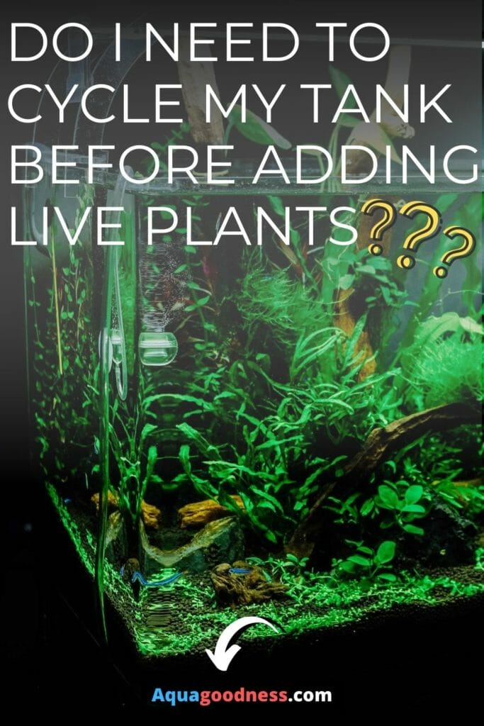 Do I Need to Cycle My Tank Before Adding Live Plants? image