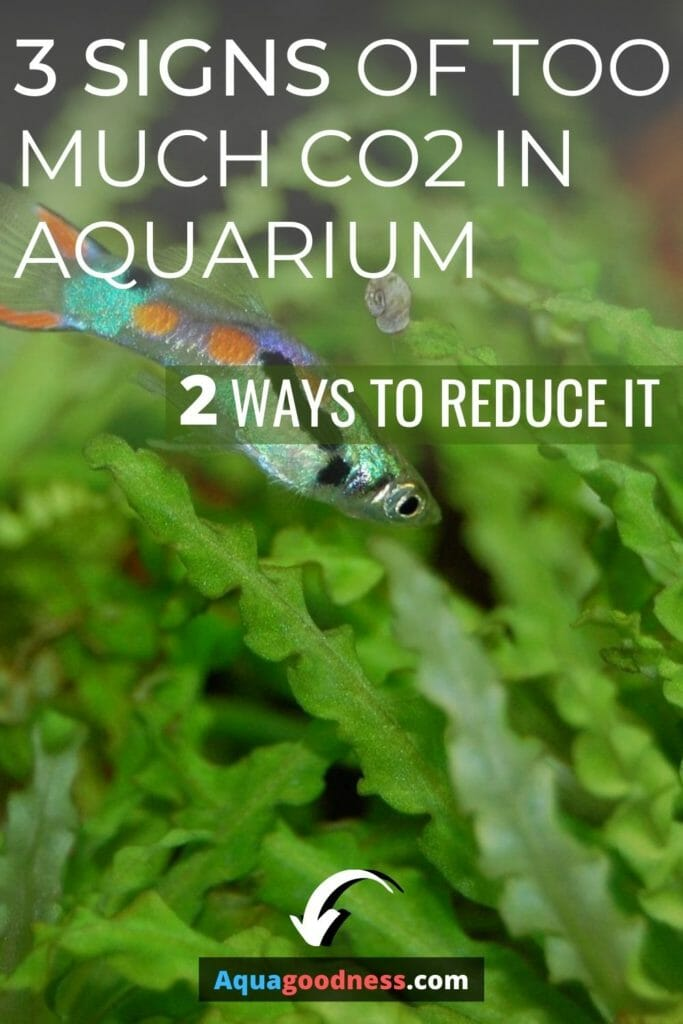 3 Signs of Too Much CO2 in aquarium (And 2 ways to reduce it) image