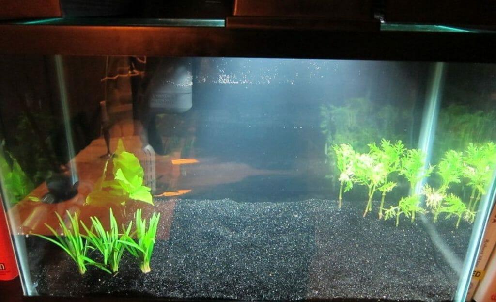 fish tank with aquarium light on