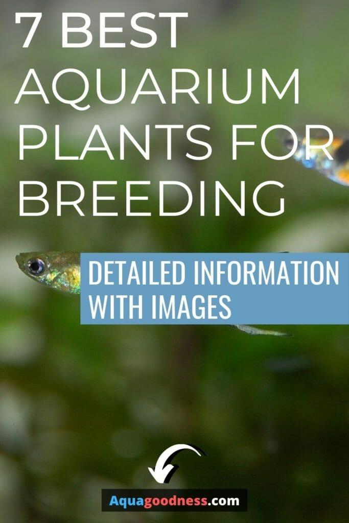 Best Aquarium Plants for Breeding image