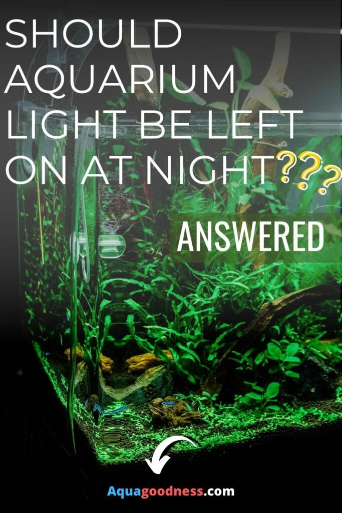 Should Aquarium Light be Left on at Night? (Answered) image