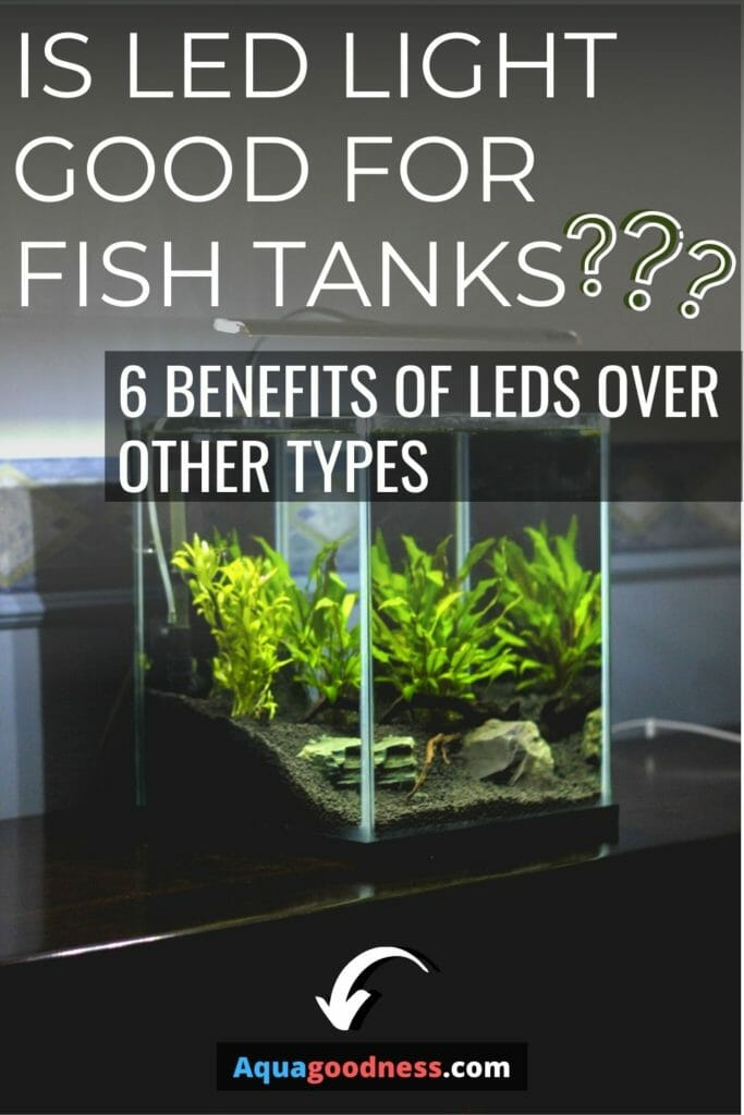 Is LED light good for fish tanks? (6 Benefits of LEDs over other types) image