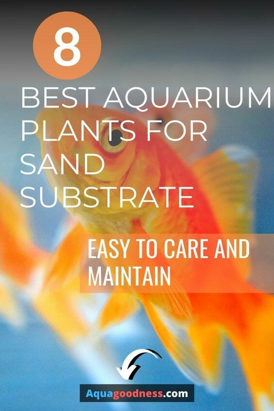 8 Best Aquarium Plants for Sand Substrate (Easy to Care and Maintain) pin