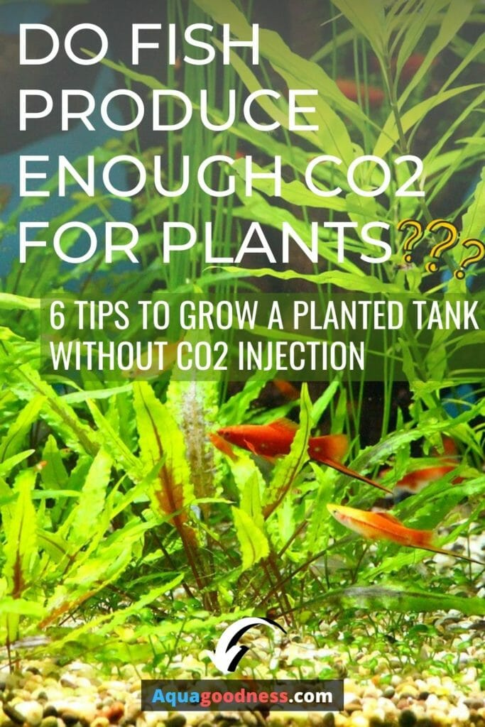 Do fish produce enough co2 for plants? (Yes, but...) image