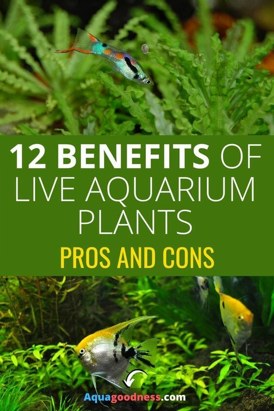12 Benefits of Live Plants in an Aquarium (Pros and Cons) pin