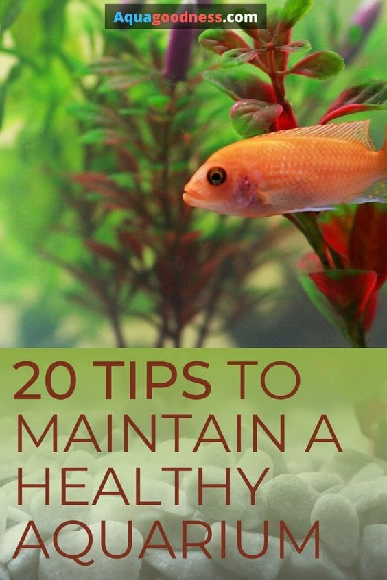 20 Tips to Maintain a Healthy Aquarium pin
