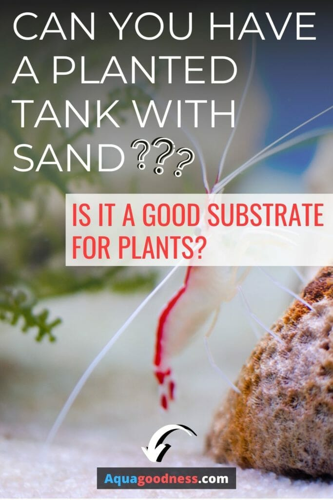 Can You Have a Planted Tank with Sand? (Is it a good substrate for plants?) image
