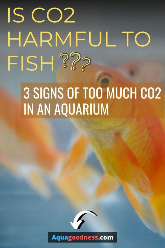 Is CO2 Harmful to Fish? (3 Signs of too much co2 in an aquarium) image