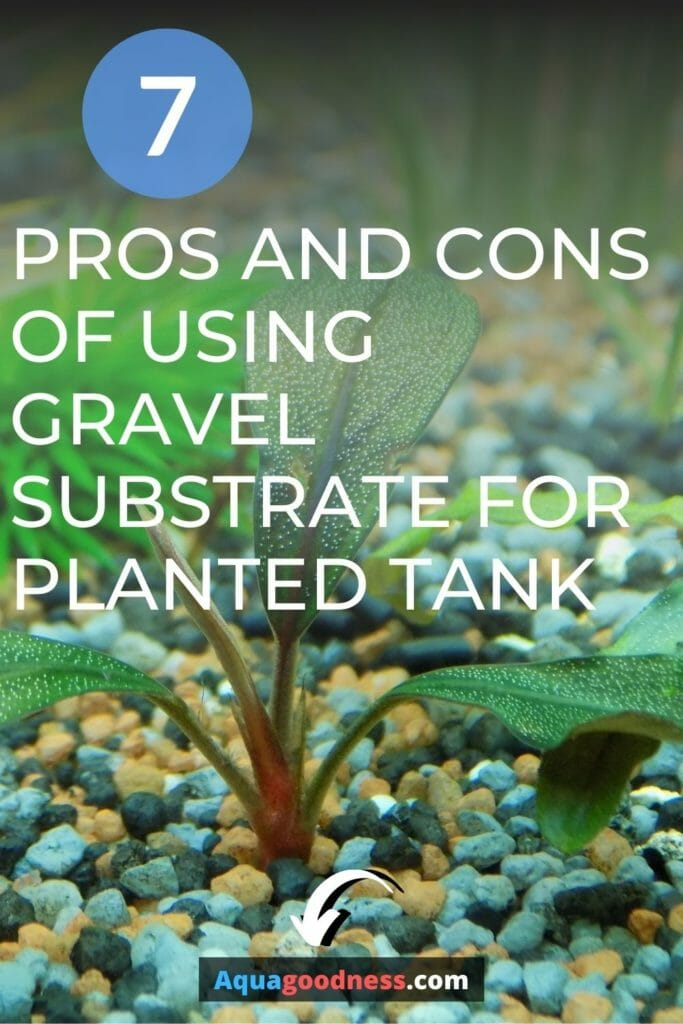Pros and Cons of gravel substrate for planted tank image