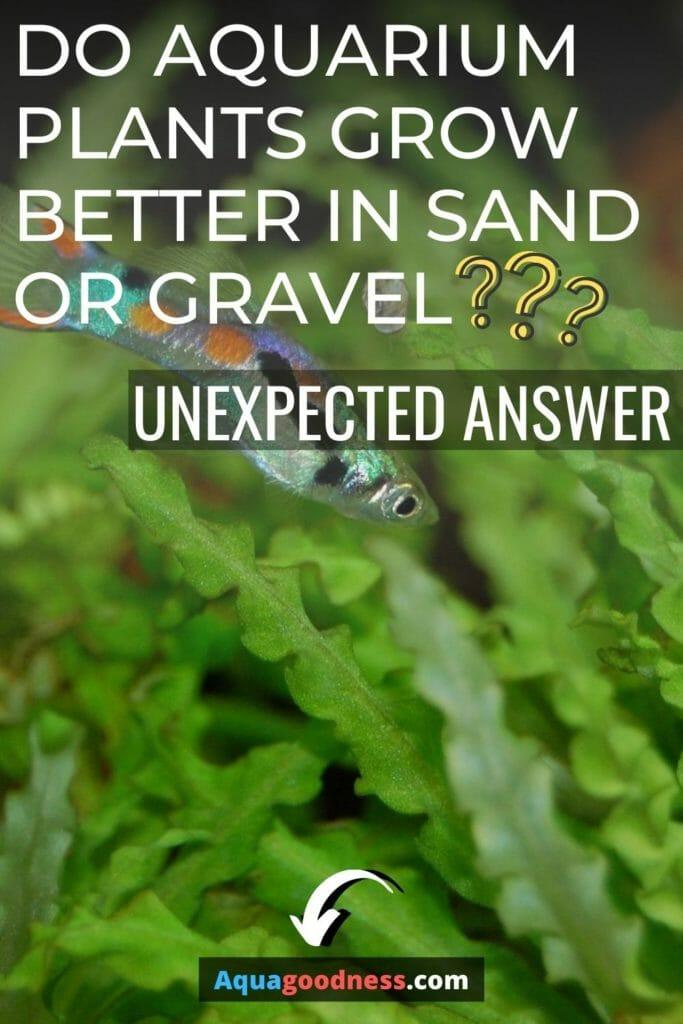 Do Aquarium Plants Grow Better in Sand or Gravel image