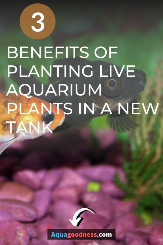 Benefits of planting live aquarium plants in a new tank