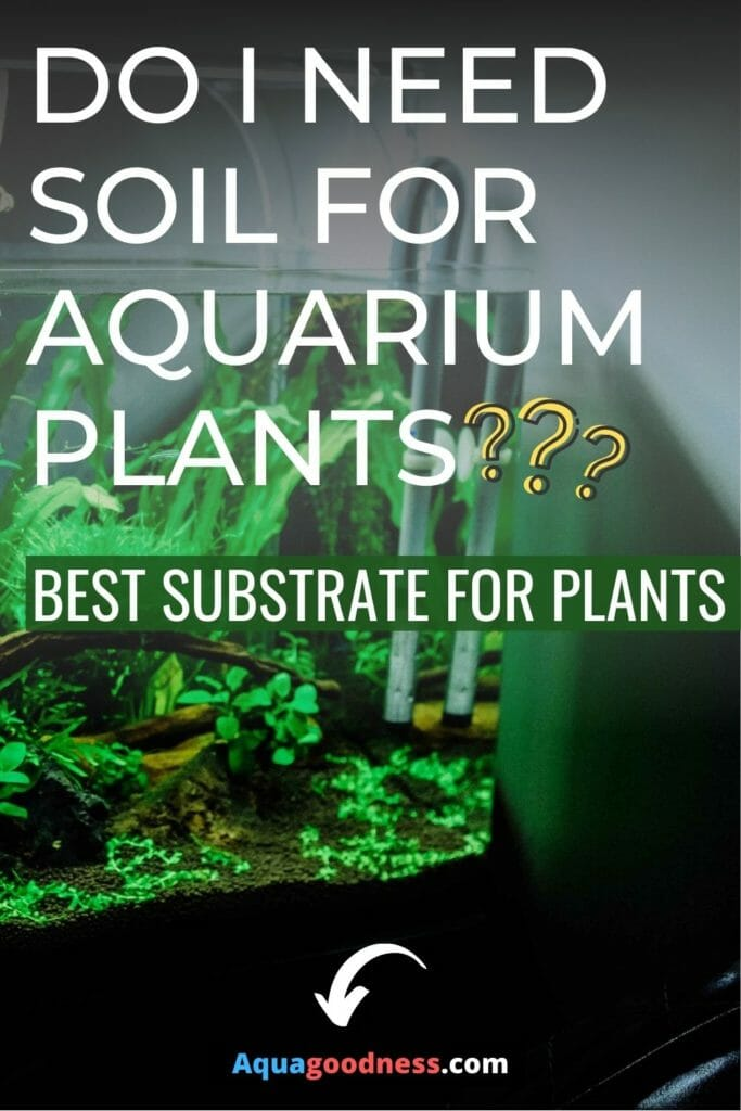 Do I Need Soil for Aquarium Plants? (Best Substrate for Plants?) image