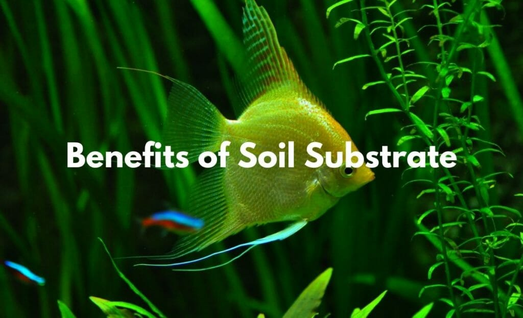 benefits of soil substrate image