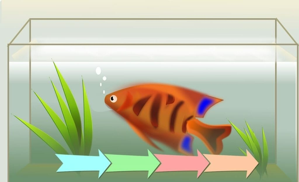 image of fish in a fish tank with cycling diagram