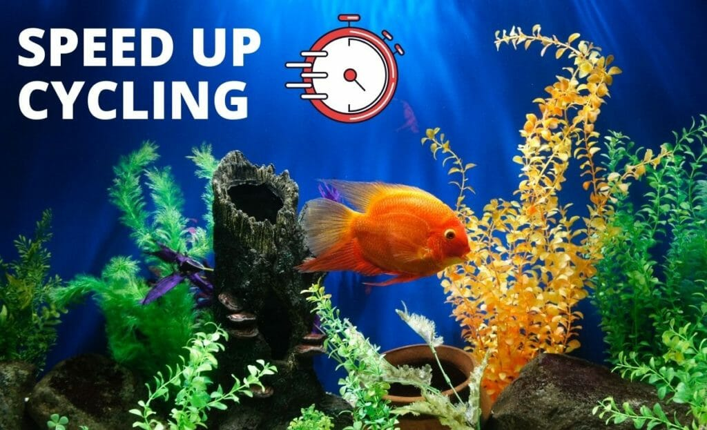 fish tank image with text speed up cycling with a stopwatch diagram
