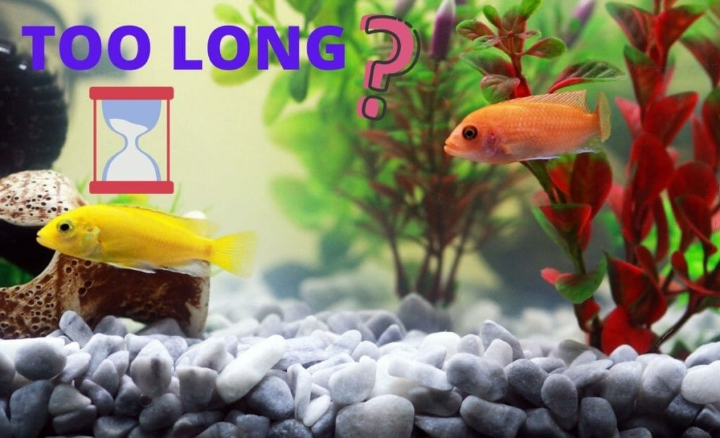 """fish tank with fish and text overlay """"how long"""""""
