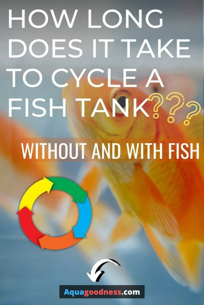 How Long Does It Take To Cycle A Fish Tank? (Without And With Fish) image