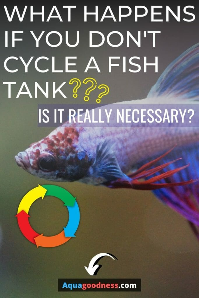 "a betta fish image with test on it ""What Happens if You Don't Cycle a Fish Tank? (Is It Really Necessary)"""