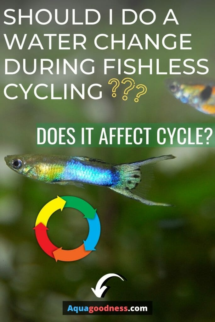 Should I Do a Water Change During Fishless Cycling? (Does It Affect Cycle) image