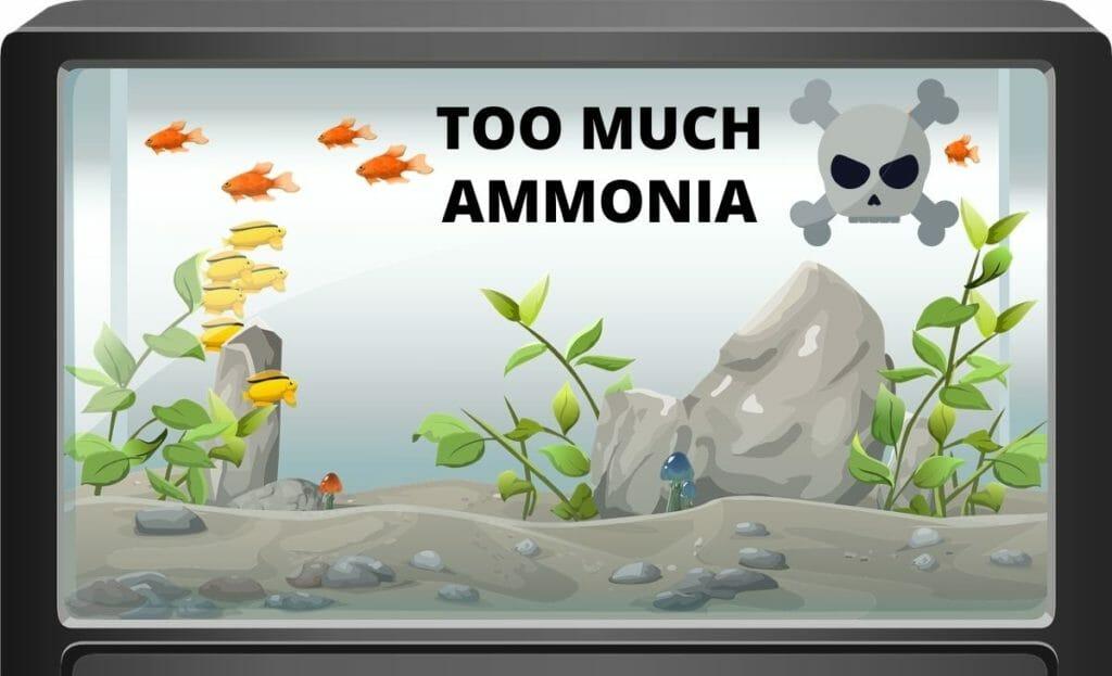 too much ammonia in aquarium