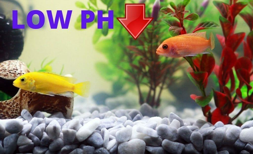 low ph in aquarium